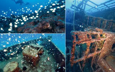 Clockwise from top left: butterflyfish at Lighter's Rock; the Frontier wreck; the Bedgellet wreck.