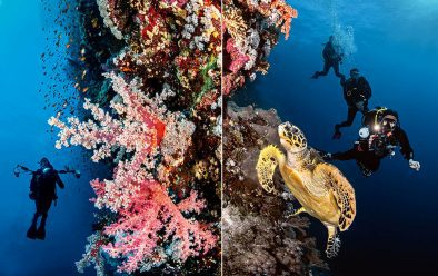 Left: Chris Dascher on Elphinstone wall. Right: Turtle at Daedalus.