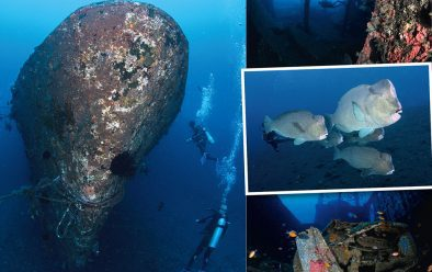 Above, clockwise from left Stern of the Kubu wreck; one of Liberty's big holds makes a fine swim-through; bumphead parrotfish; a car in the main hold in the Kubu wreck.