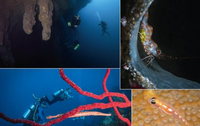 Above, clockwise from top left: Divers in the Blue Hole; shrimp; coral goby; going the same way – divers and trumpetfish.