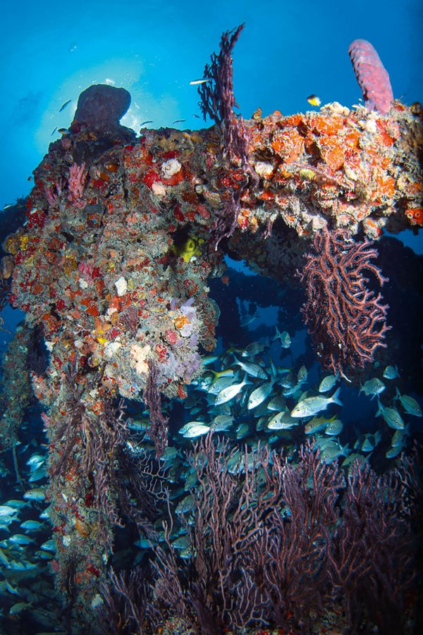 Jungle Gym is full of schools of fish, seafans, sponges and soft corals.