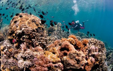 Outstanding corals at Mike's Reef.