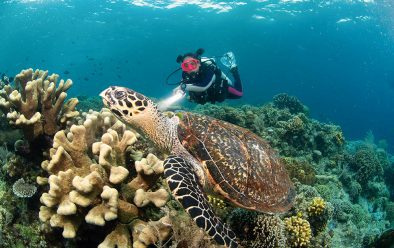 Cindy with a green turtle.