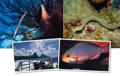 Clockwise from top left: Trumpetfish are a signature of the reefs; sharptail snake-eels are also a common sight – they can grow to a metre long, and feed on crabs; parasitic isopod on a creolefish's gill; it can only be St Lucia – the Pitons.