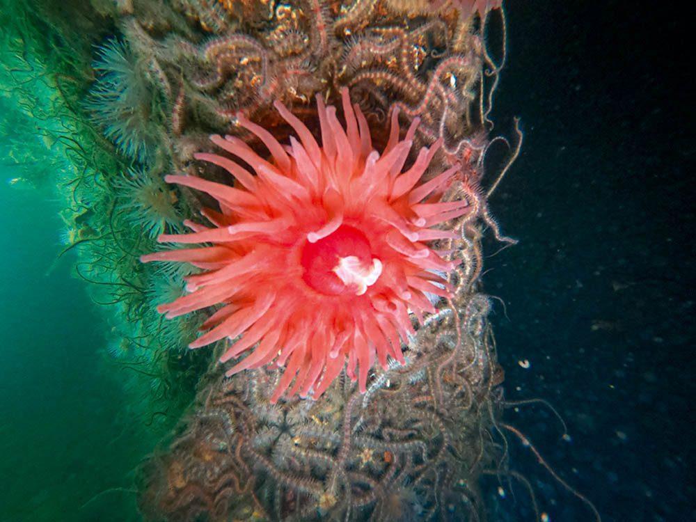 Dahlia anemone on the Akka