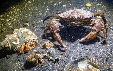 An assortment of crabs at Twin Piers.