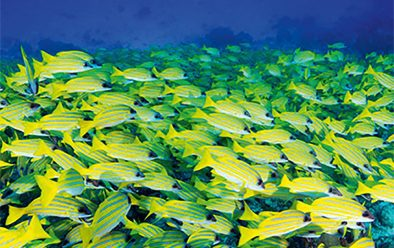A typical Maldives reef sight.