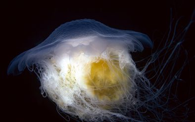 …and for jellyfish.