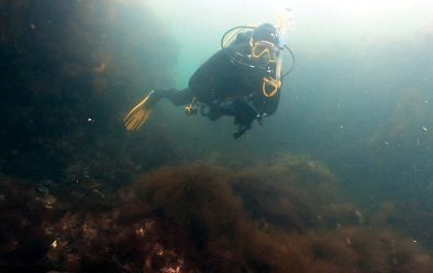 Dave Gibbins exploring the area of kelp-covered gullies.
