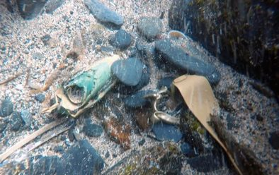 The sight of artefacts that originally drew the divers to the gully.