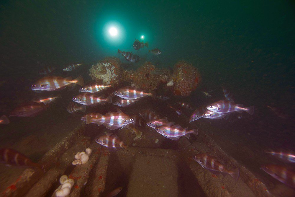 On the wreck of the submarine M2.