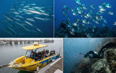 Clockwise from top left: Islas Hormigas barracuda; common two-banded sea-bream; trying to capture the sheer abundance of fish life; the Acuasuboeste dive-boat.